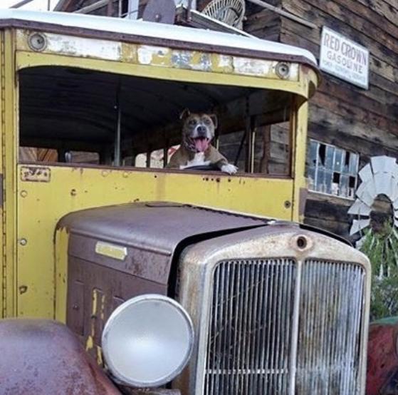 Dog Driving Vintage truck